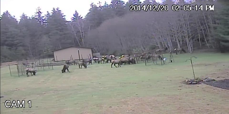 Elk.avi_snapshot_00.03_2015.06.13_20.15.07.jpg