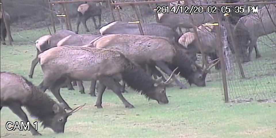 Elk.avi_snapshot_00.24_2015.06.13_20.17.01.jpg