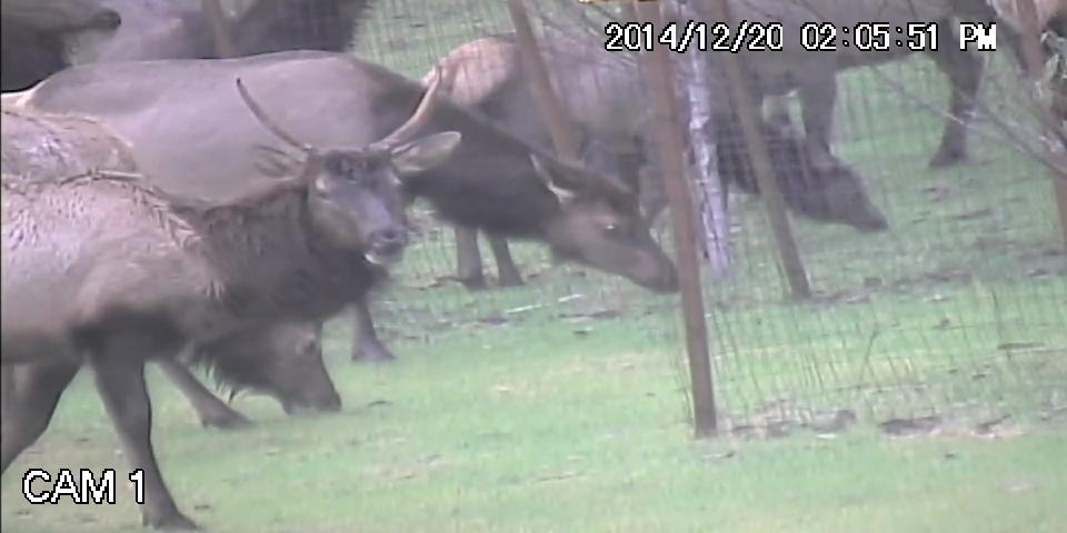 Elk.avi_snapshot_00.40_2015.06.13_20.18.14.jpg