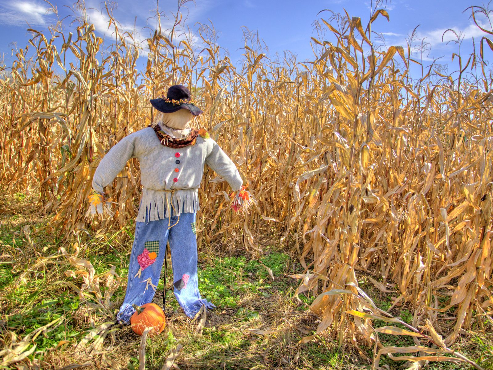 the scarecrow These example sentences are selected automatically from various online news sources to reflect current usage of the word 'scarecrow' views expressed in the examples do not represent the opinion of merriam-webster or its editors.
