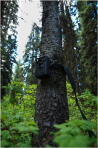 game camera on tree