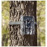 Game Camera on Tree