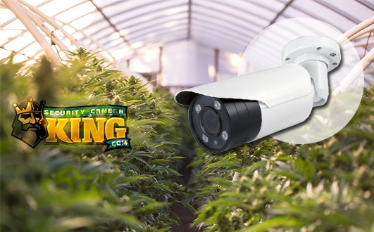 Marijuana Security Camera Systems