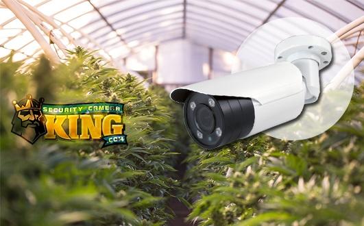 Marijuana Security Camera Systems